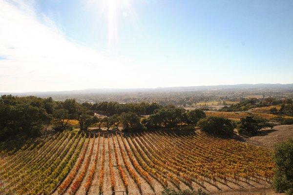 Winery-Itinerary-5